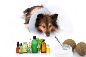 ароматерапию используют и для лечения животных